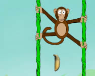 Jungle spider monkey Affe online spiele